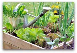 vrste zelenjave na vrtu